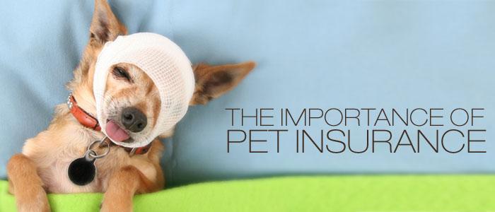 pet-insurance-costa-del-sol